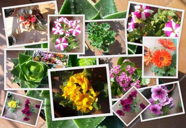 Çiçekler hakkında ilginç gerçekler 1024 defa okundu 30 ocak