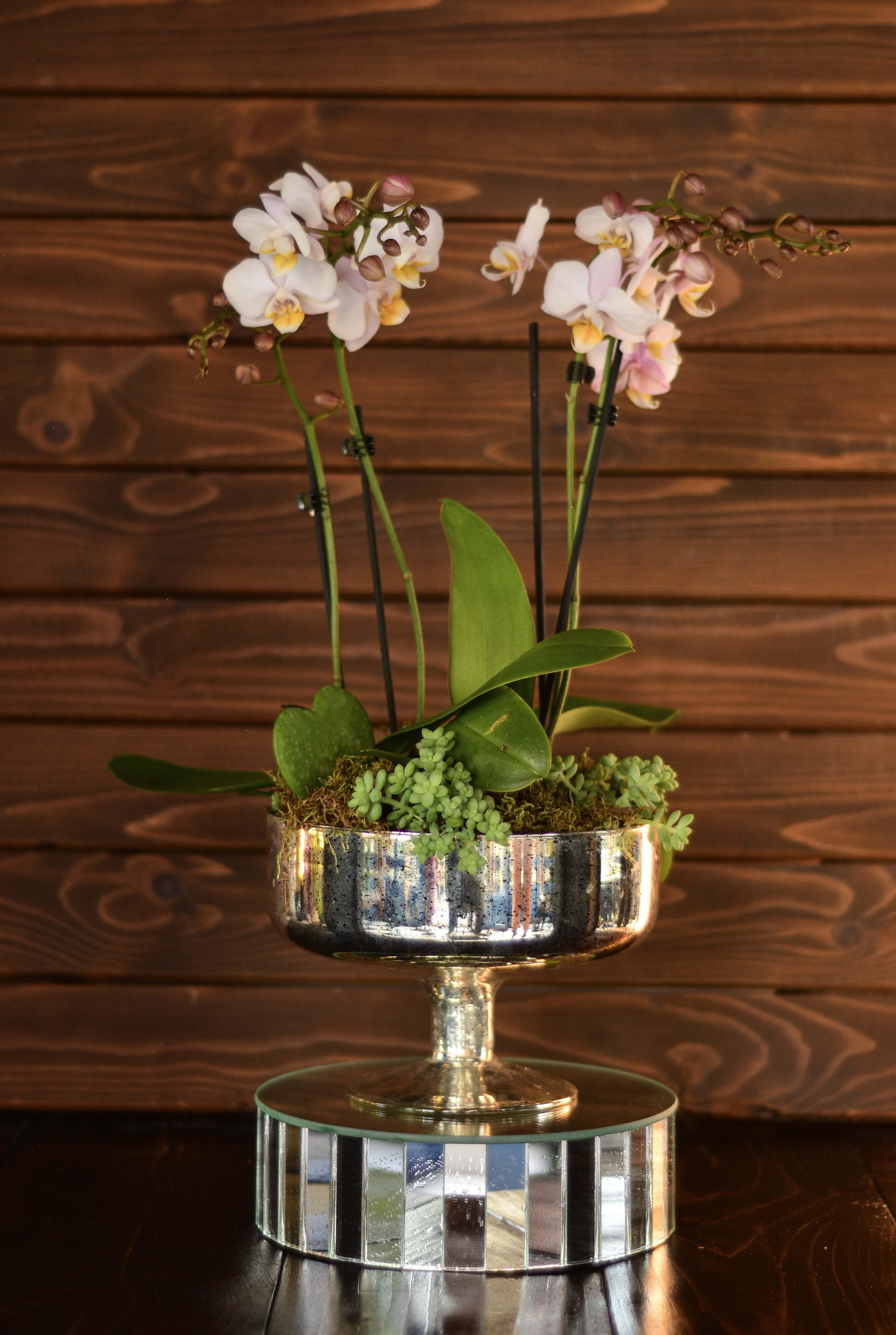 Çift Orkideli Teraryum