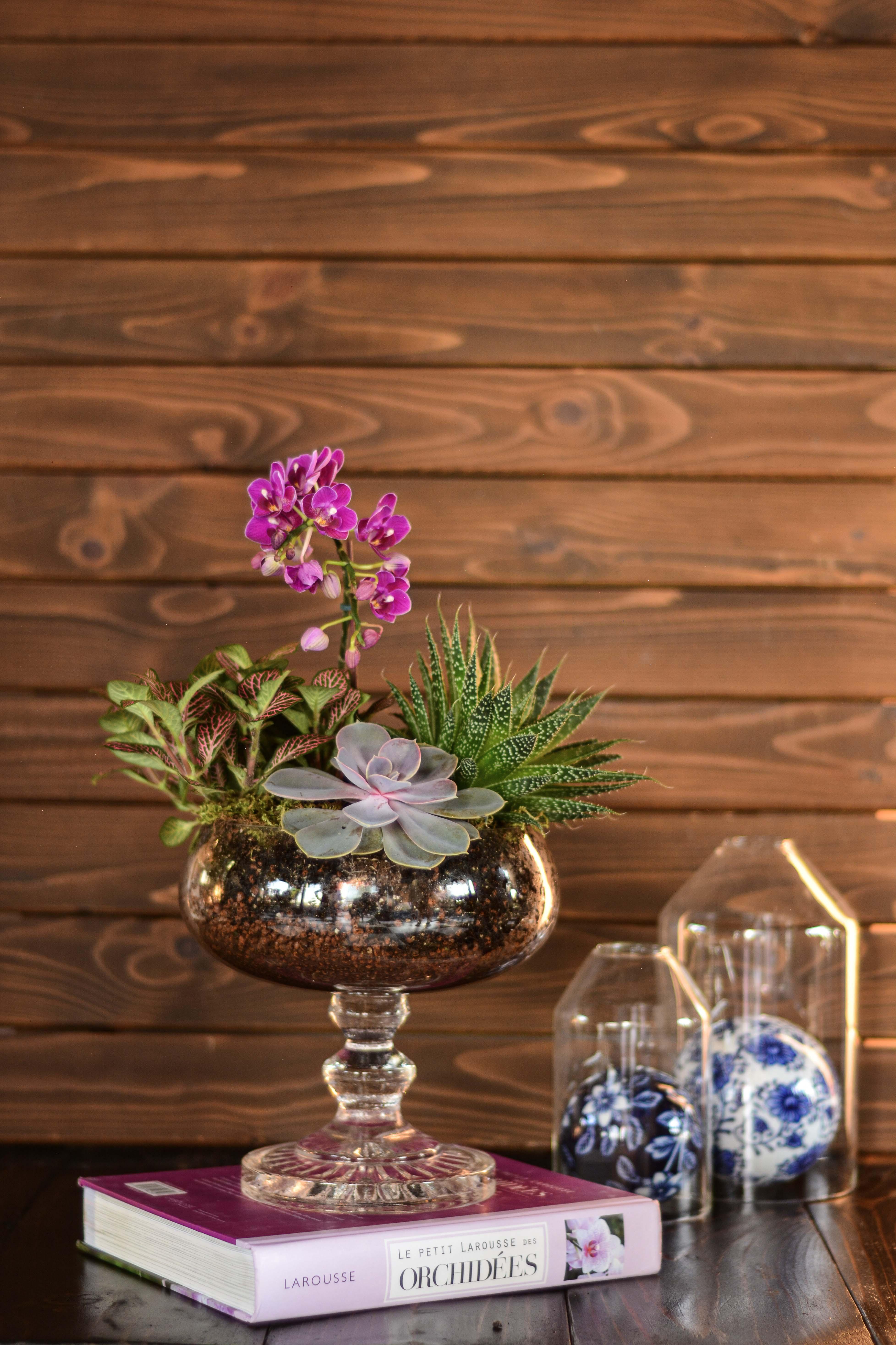 Ayaklı Vazoda Mini Orkide Teraryum