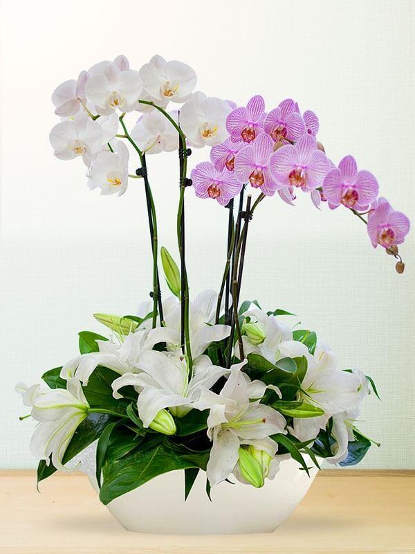 Asil Güzel Orkide ve Lilyum Aranjmanı