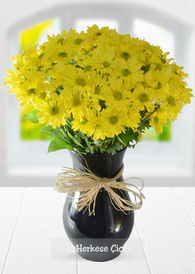 Baharın Ezgisi Sarı Papatyalar