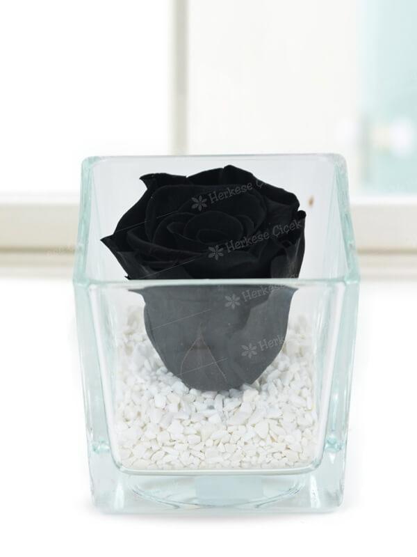 Kare Camda Solmayan Siyah Gül