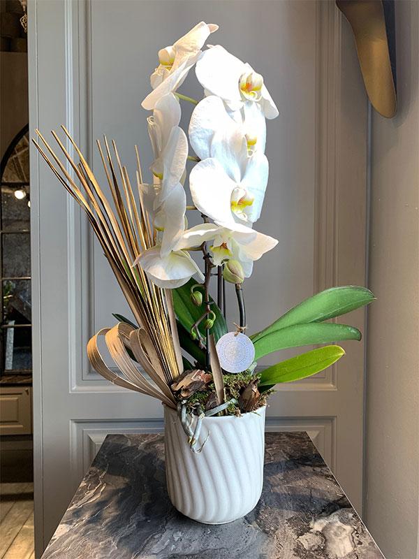 Tek Dal Özel Orkide