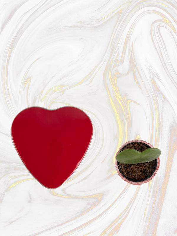 Minik Sürpriz Kalp Sukulent  ve Kalp Çikolata