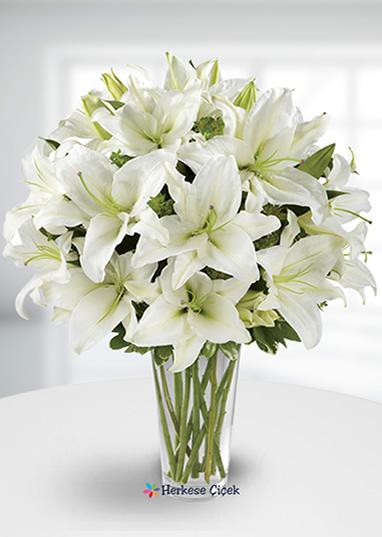 Şık Beyaz Lilyum
